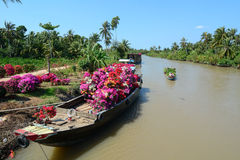 Wooden boats carry flowers on river in Mekong Delta, Vietnam Royalty Free Stock Images