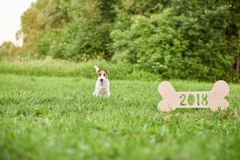 Adorable happy fox terrier dog at the park 2018 new year greetin royalty free stock image