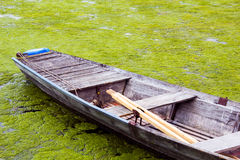 A wooden boat in a river full of seaweed Royalty Free Stock Images
