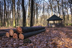 Wooden bower stands in autumn forest nature Stock Photo