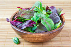 Wooden bowl with chard, spinach and lettuce Stock Images