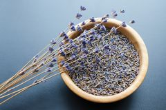 Dry lavender flowers. Wooden bowl with dried lavender tea and flowers over blue background royalty free stock images
