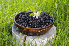 Wooden bowl of fresh blueberries Royalty Free Stock Photos