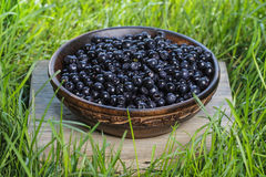 Wooden bowl of fresh blueberries Royalty Free Stock Images