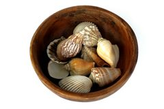 Wooden Bowl With Seashells Royalty Free Stock Photography
