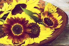 Wooden bowl with sunflowers. Stock Images