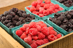 Wooden box with baskets of berries. A wooden box with baskets of red raspberries and black raspberries Stock Image