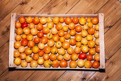 Wooden box of orange cherry tomatoes stock images