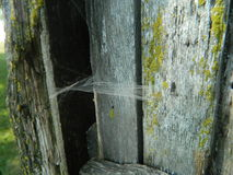 Wooden box with cobwebs Royalty Free Stock Images