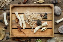 Wooden box, dried roots, nut shell, coconuts, dry plants, eucalyptus, lotus seeds for floristic design on old wooden board. Top view royalty free stock photos