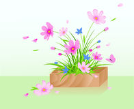 Wooden box with flowers Stock Photos