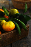 Wooden box with fresh green, yellow and orange tangerines Royalty Free Stock Photo
