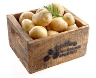 Wooden box of fresh new farm potatoes Royalty Free Stock Photography