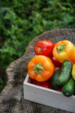 Wooden box with fresh vegetables (tomato, cucumber, bell pepper) Stock Photo