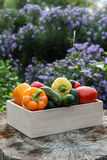Wooden box with fresh vegetables (tomato, cucumber, bell pepper) Royalty Free Stock Photography