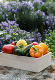 Wooden box with fresh vegetables (tomato, cucumber, bell pepper) Royalty Free Stock Photos