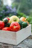 Wooden box with fresh vegetables (tomato, cucumber, bell pepper) Stock Photography