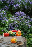 Wooden box with fresh vegetables (tomato, cucumber, bell pepper) Royalty Free Stock Images