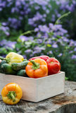 Wooden box with fresh vegetables (tomato, cucumber, bell pepper) Royalty Free Stock Photo