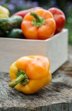 Wooden box with fresh vegetables (tomato, cucumber, bell pepper) Stock Images