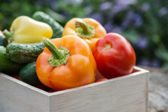Wooden box with fresh vegetables (tomato, cucumber, bell pepper) Stock Photos
