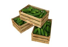 Wooden box full of cucumbers. Isolated on white background. Stock Photo