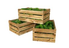 Wooden box full of cucumbers. Isolated on white background. Stock Image