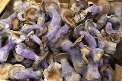 Purple mushrooms in a box Royalty Free Stock Image