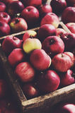 Wooden box full of ripe red apples Royalty Free Stock Image