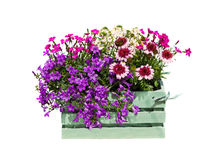 A wooden box with garden flowers. Royalty Free Stock Photo