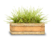 Wooden box with green grass Stock Image