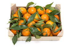 Wooden box with mandarines Stock Images