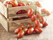 Wooden box with mini marzano tomatoes. Wooden box with fresh ripe mini marzano tomatoes on the vine with a bunch displayed on a wooden surface outside the box Royalty Free Stock Photo