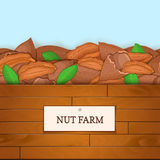 Wooden box with pecan nuts. Vector illustration. Boards wood background, border with walnut fruit and label. For the Stock Images