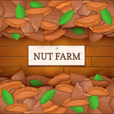 Wooden box with pecan nuts. Vector illustration. Boards wood background, border with walnut fruit and label. For the Stock Photo