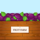 Wooden box with plum fruits. Vector card illustration. Boards wood background, border with plums fruit and label. For Royalty Free Stock Photography