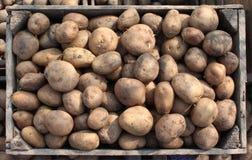 Wooden box of potatoes Royalty Free Stock Photo