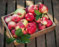 Wooden box of red apples on wooden boards. Stock Image