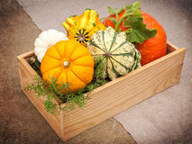 Wooden Box with ripe pumpkins Royalty Free Stock Images