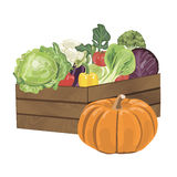 Wooden box with vegetables. Illustration of wooden box filled with freshly picked vegetables. Vector illustration EPS 10 Royalty Free Stock Photos