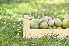 Wooden box of walnuts Stock Images