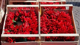 Wooden boxes full of bunches of bright red chili pepper under the sun in an outdoor market stock image