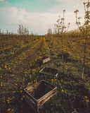 Wooden boxes in young orchard. Old wooden boxes in scenery of young apple trees royalty free stock photos