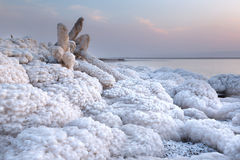 Wooden branch covered with Salt in Dead Sea, Jordan Stock Images