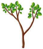 Wooden branch with green leaves. Illustration Royalty Free Stock Photos