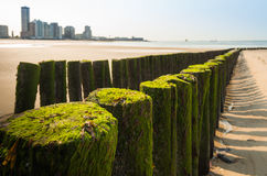 Wooden breakwater on a Dutch beach Royalty Free Stock Photography
