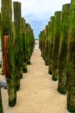 Wooden breakwater ons beach of Wissant, cote opale, France stock images
