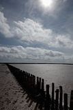 Wooden breakwater in the Wadden Sea Stock Image