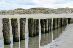 Wooden breakwaters on the beach in Nieuw Haamstede Zeeland Stock Photography