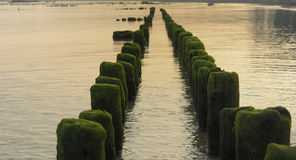 Wooden breakwaters in sea Royalty Free Stock Photos
